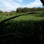 Campos verdejantes